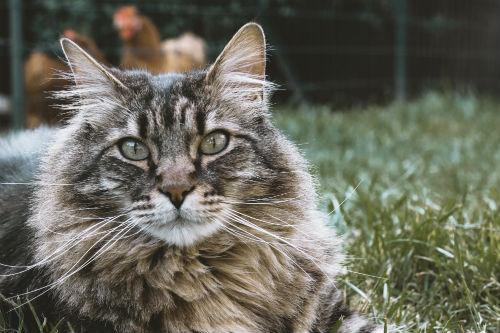 Medical Intuitive Healer's cute tabby cat