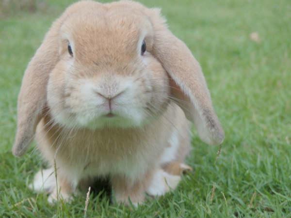Medical Intuitive Healer bunny rabit