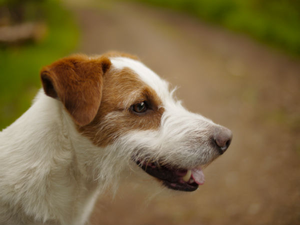 Medical Intuitive Healer's white and brown dog